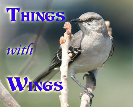 Photo Gallery - Things with Wings