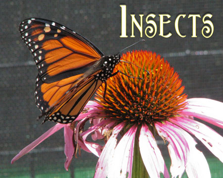 Photo Gallery - Insects