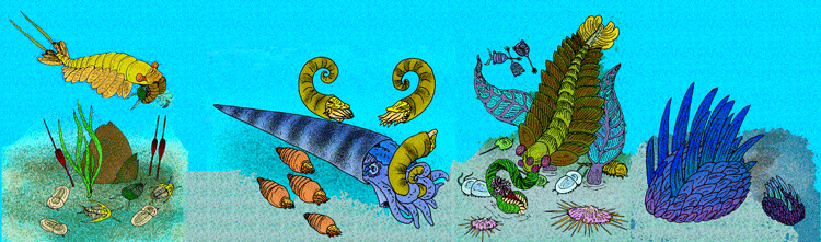 Sketch of a hypothetical Cambrian fauna
