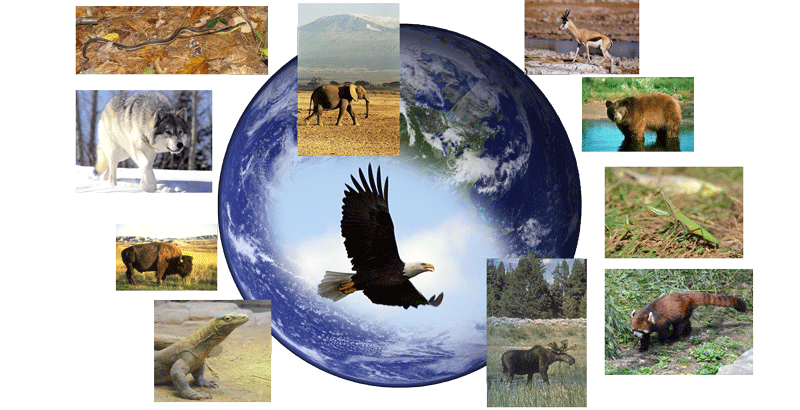 Collage of animals with Earth as background